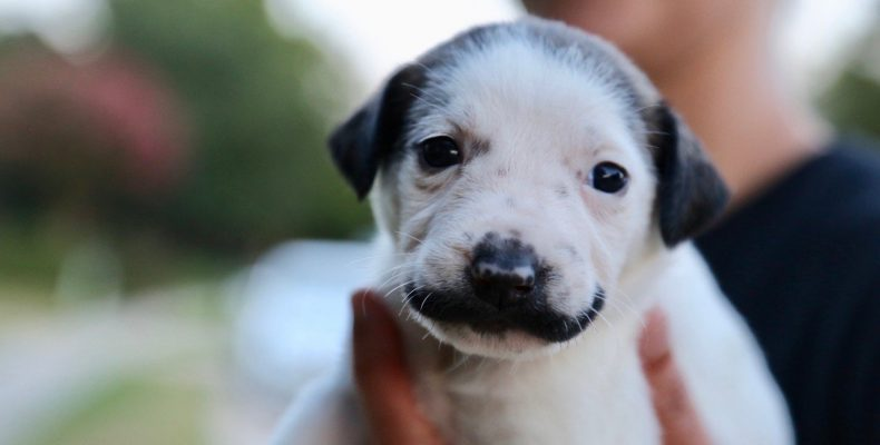 Perierga.gr - Ένας σκύλος με μουστάκι!