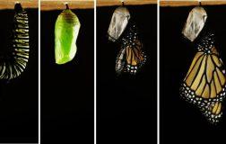 Perierga.gr - Perierga.gr - Από κάμπια σε πεταλούδα: Η διαδικασία της μεταμόρφωσης