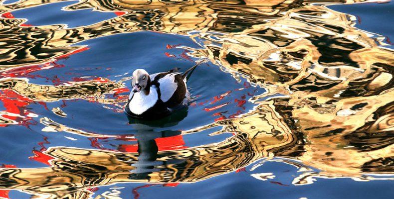 Perierga.gr - Διαγωνισμό καλύτερης φωτογραφίας πουλιών - Η νικήτρια φωτογραφία από τη λίμνη Κερκίνη