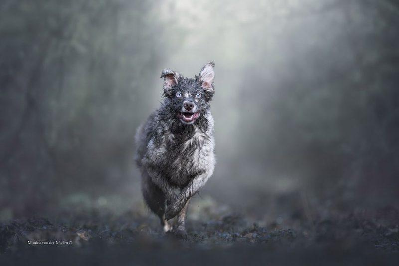 Perierga.gr - Οι νικήτριες φωτογραφίες στο διαγωνισμό σκύλος της χρονιάς 2019