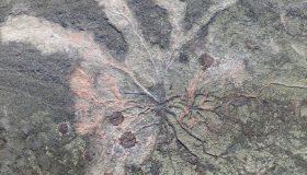 Perierga.gr - Το αρχαιότερο απολιθωμένο δάσος του κόσμου