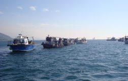 Perierga.gr - Έπιασαν καρχαρία 4 μέτρα και 100 κιλά στον Βόλο