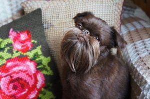 Perierga.gr - Σκύλος με... μούσι!
