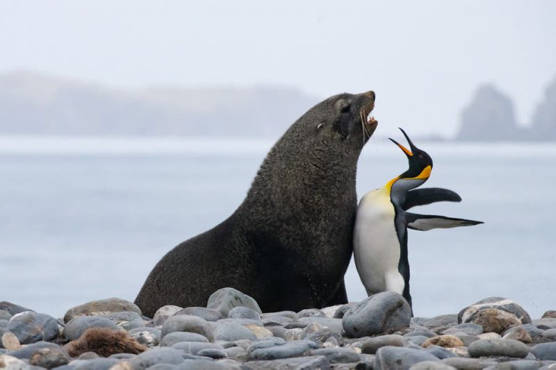 Perierga.gr - Ζώα πρωταγωνιστές σε αστείες φωτογραφίες