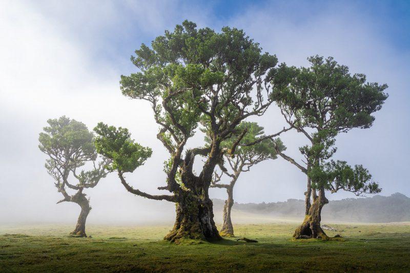 Perierga.gr - Το αρχαίο δάσος της Μαδέρα με δέντρα 500 ετών