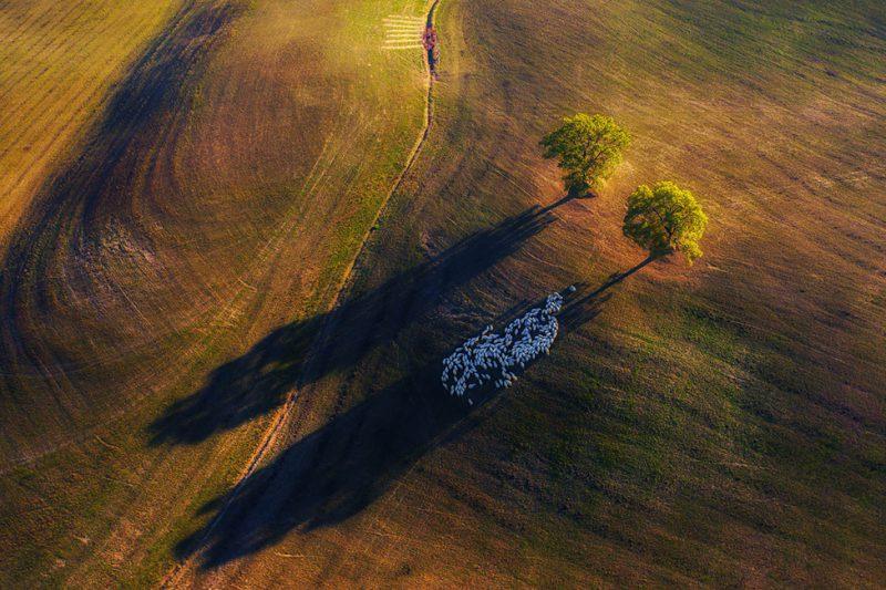 Perierga.gr - Νικήτριες φωτογραφίες από τον διαγωνισμό άγριας ζωής