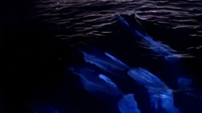 Perierga.gr - Δελφίνια που λάμπουν στη θάλασσα!