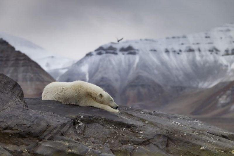Perierga.gr - Φωτογραφίες με θέμα την κλιματική αλλαγή