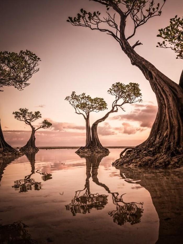 Perierga.gr - Νικήτριες φωτογραφίες του διαγωνισμού Sony World Photography