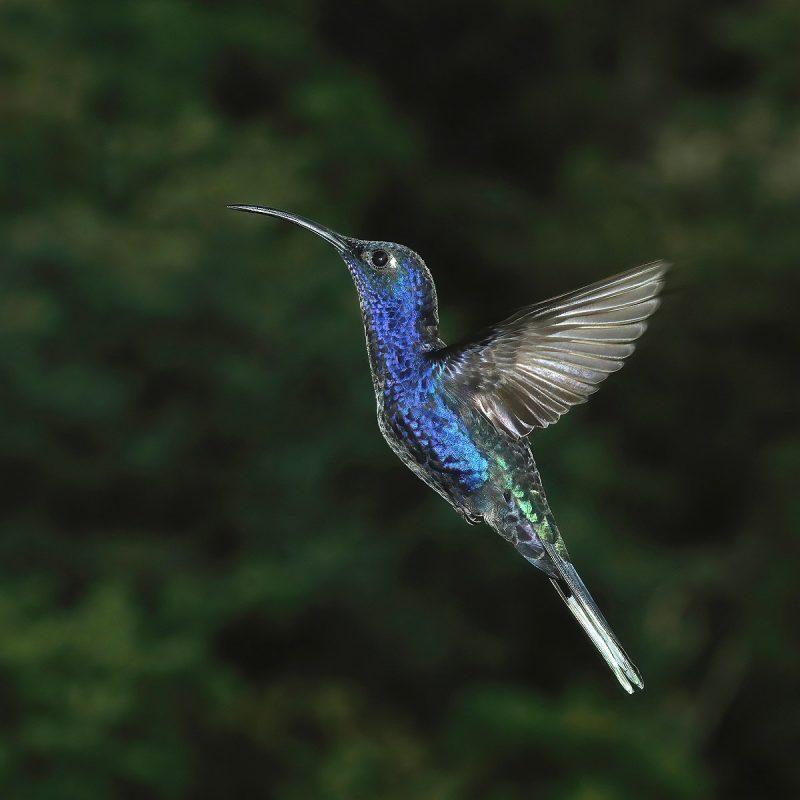 Perierga.gr - Τα όμορφα εξωτικά πτηνά της Κόστα Ρίκα