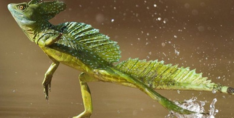 Perierga.gr - 9 ζώα που κατέχουν εντυπωσιακά ρεκόρ σύμφωνα με το Γκίνες