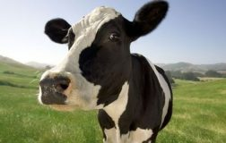Perierga.gr - Το ακριβότερο κρέας σε πακέτο κοστίζει 2.200€!