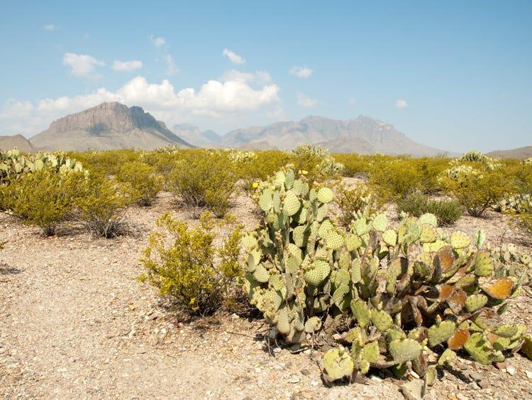 Perierga.gr - 10 εντυπωσιακές φωτογραφίες από τις ερήμου του πλανήτη