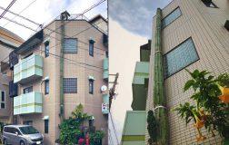 Perierga.gr - Κάκτος φτάνει σε ύψος τριώροφο κτήριο!