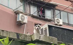 Perierga.gr - Γάτα... μονίμως λυπημένη!