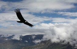 Perierga.gr - Πουλί μπορεί να πετάξει απόσταση περίπου 170 χλμ χωρίς να κουνήσει τα φτερά του!