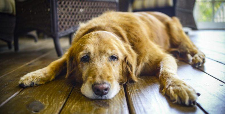 Perierga.gr - Νέα μελέτη ανατρέπει τον τρόπο που υπολογίζαμε μέχρι τώρα την ηλικία των σκύλων
