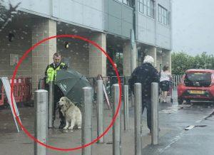 Perierga.gr - Άνδρας security κράτησε ομπρέλα σε σκύλο για να μη βραχεί και έγινε παγκόσμιο viral