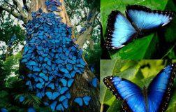 Perierga.gr - Όμορφο θέαμα: Μπλε πεταλούδες στον κορμό δέντρου