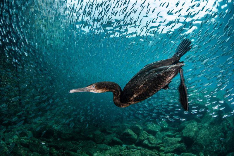 Perierga.gr - 13 εξαιρετικές φωτογραφίες από το διαγωνισμό φωτογράφος πτηνών της χρονιάς