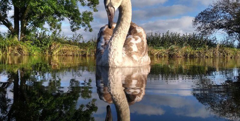 13 εξαιρετικές φωτογραφίες από το διαγωνισμό φωτογράφος πτηνών της χρονιάς